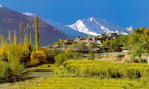 Rakaposhi as Seen from Karimabad in the Hunza