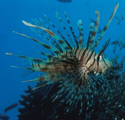 red-sea-fish