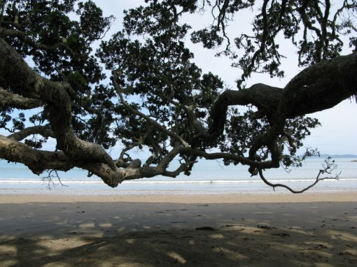 Funky Pohutukawa Trees on Coopers Beach