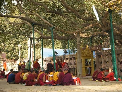 bodhgayabodhitree