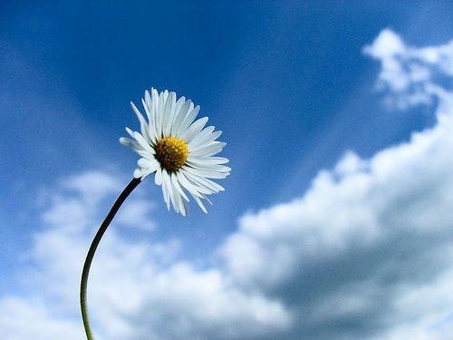 daisy_sky1