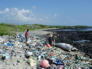 This Beach is not so Pristine