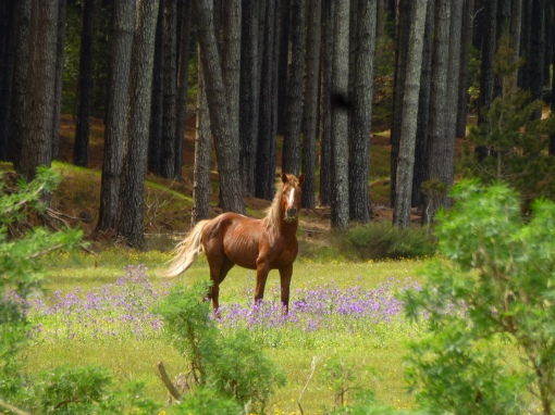 Horse photo near Ngataki by chris Farrell