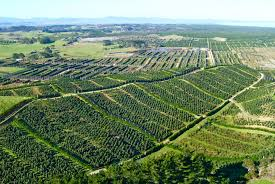 King Avocado orchards on the Aupouri Peninsula