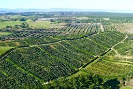 King Avocado orchards on the Aupouri Peninsula