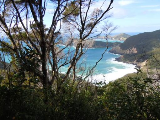 From a recent walk to Cape Brett