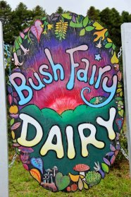 Bush Fairy Dairy2